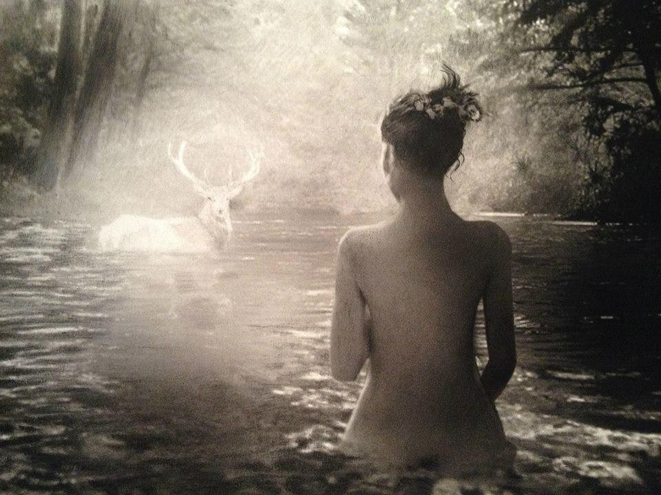 Romain Renard - Melvile - baignade cerf