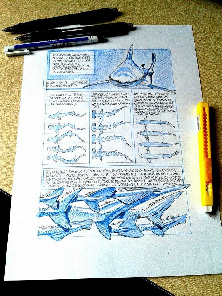 Petite Bedetheque des savoirs - Seret - Julien Sole - Les Requins - ÉTAPE